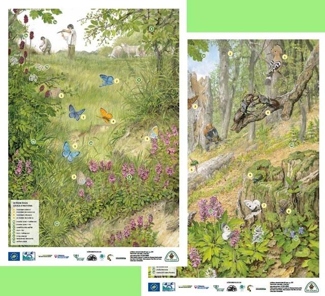 plakáty - Louky a pastviny, Světlý les